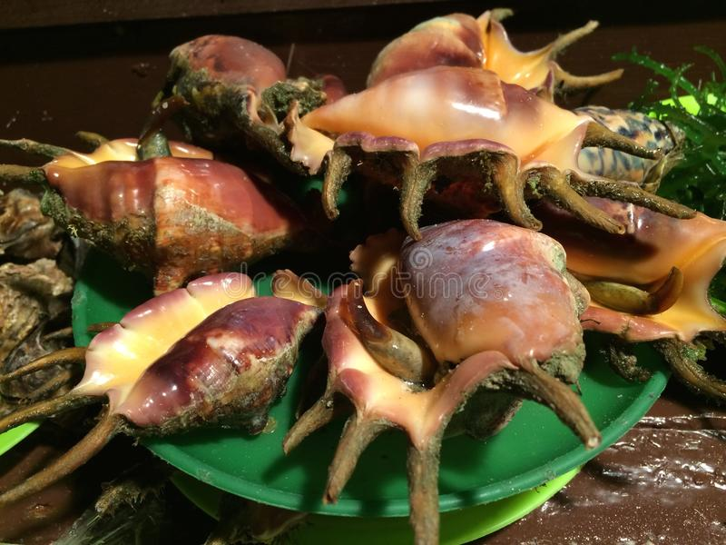 Rzadcy Shellfish, rybi rynek, Alona plaża, Panglao Filipiny fotografia royalty free