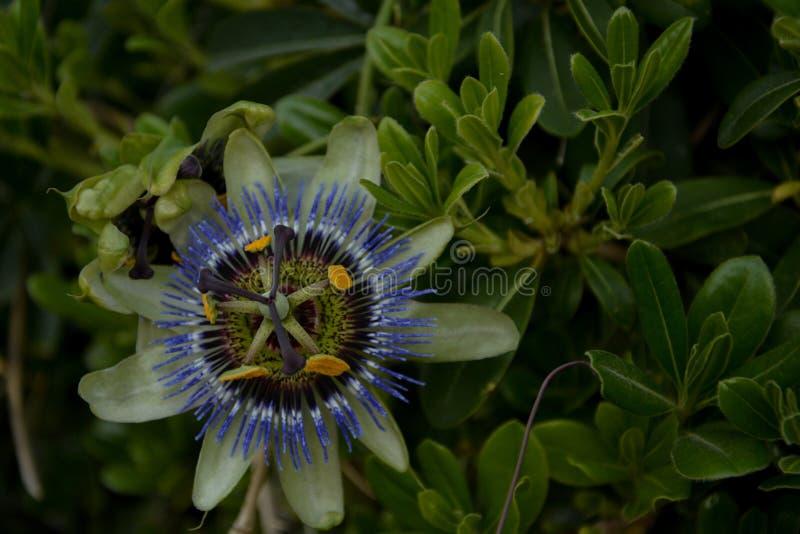 Rzadki kwiat zdjęcie stock