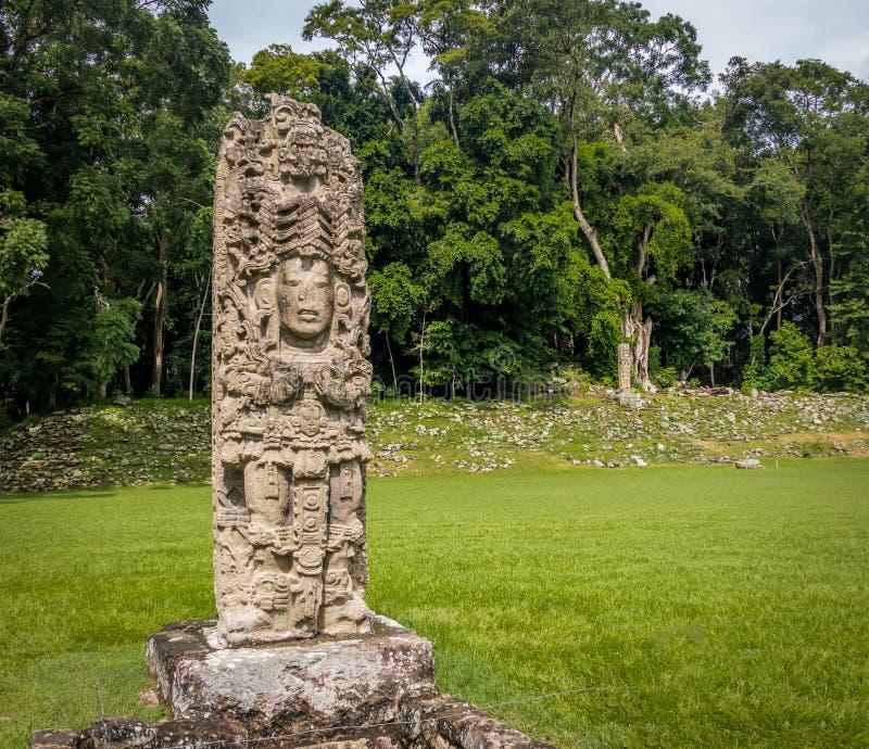 Rzeźbiący Stella w Majskich ruinach - Copan Archeologiczny miejsce, Honduras obrazy royalty free