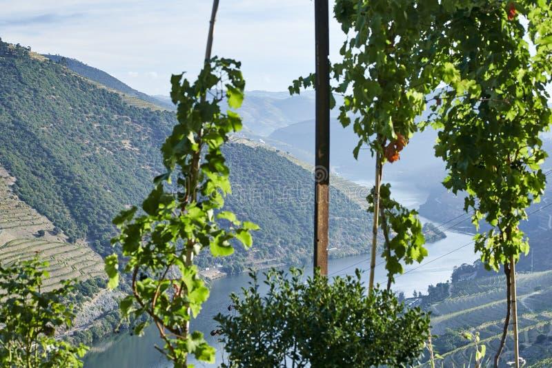 Rzeczna dolina przerastająca z drzewami z gronowymi krzakami obrazy stock