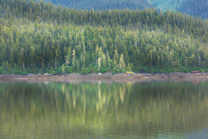 Rzeczna linia brzegowa Odbija drzewa w Szmaragdowych zieleniach fotografia royalty free