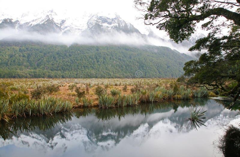 Rzeczna scena w Fiordland zdjęcie stock