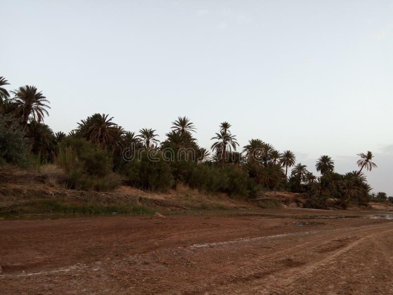 Rzeczna unosi się i amaizing natura Algeria zdjęcia royalty free