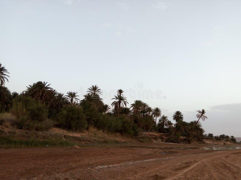 Rzeczna unosi się i amaizing natura Algeria obrazy stock