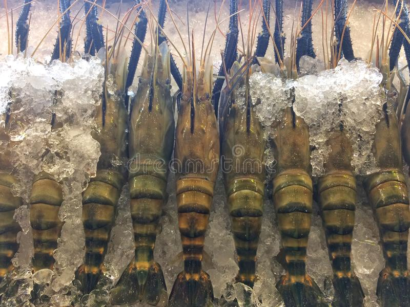 Rzeczne garnele z lodem w tacy zdjęcie royalty free