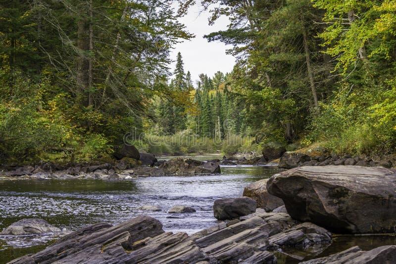 Rzeczny bieg Przez lasu w Wczesnym spadku obrazy stock