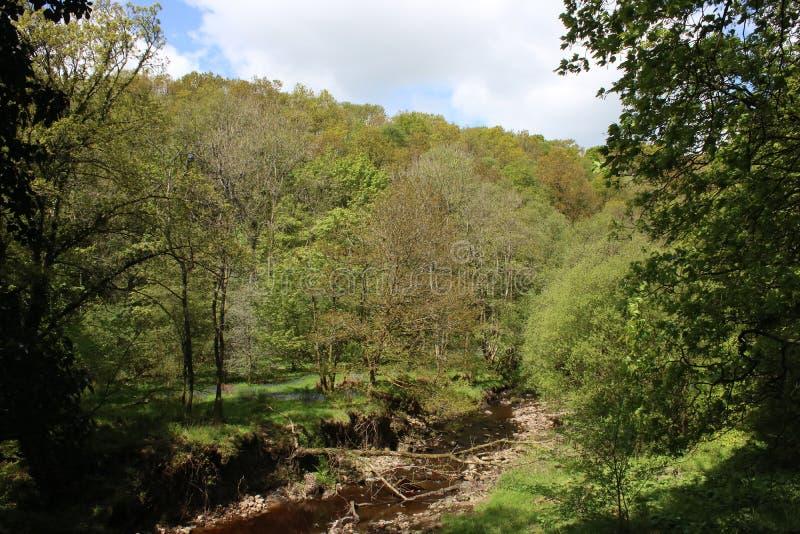 Rzeczny Calder w lesie, Calder dolina, Lancashire zdjęcia royalty free