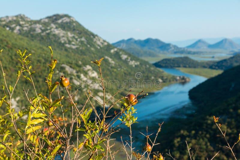 Rzeczny chył Rijeka Crnojevica rzeka w Jeziornym Skadar Nationa zdjęcie royalty free