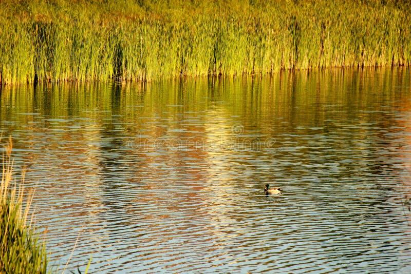 Rzeczny jezioro zdjęcia royalty free