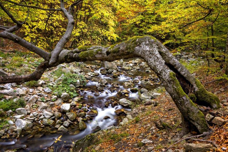 Rzeczny omijanie przez jesień lasu w górach obrazy royalty free