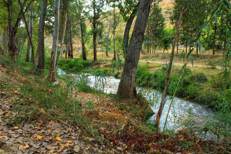 Rzeczny omijanie wzdłuż obfitolistnego lasu zdjęcia stock