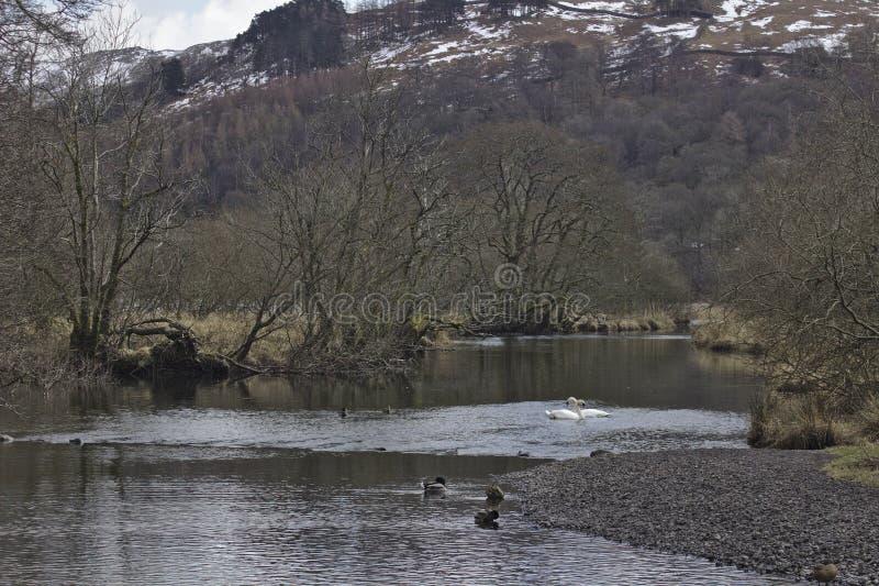 Rzeczny Rothay, Cumbria fotografia stock
