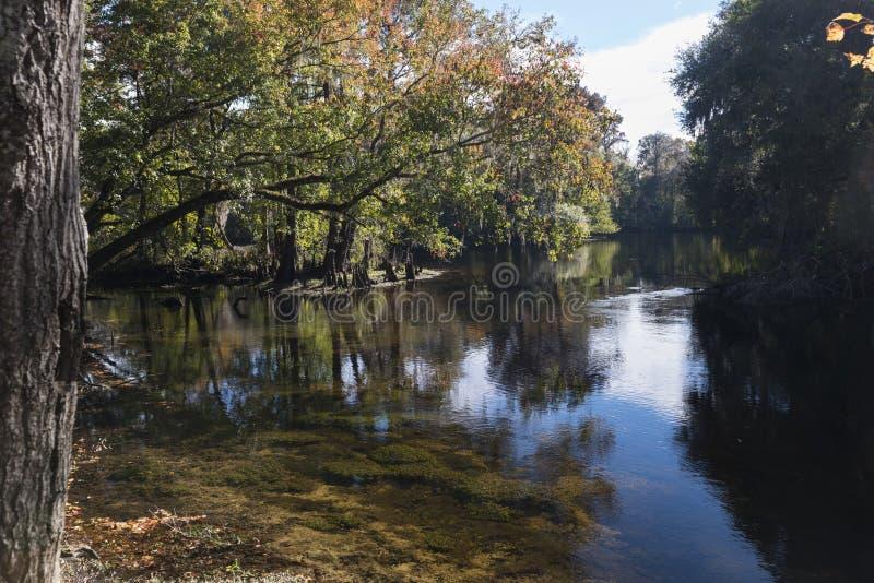 Rzeczny Santa Fe, park narodowy, Floryda zdjęcia royalty free