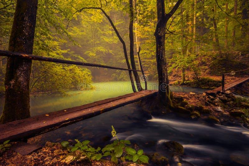 Rzeczny spływanie od naturalnego jeziora w las z otwarciem obrazy stock