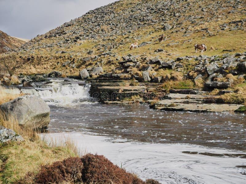 Rzeczny Tavy spada kaskadą nad skałami przez Tavy Cleave, Dartmoor park narodowy, Devon, UK zdjęcie royalty free