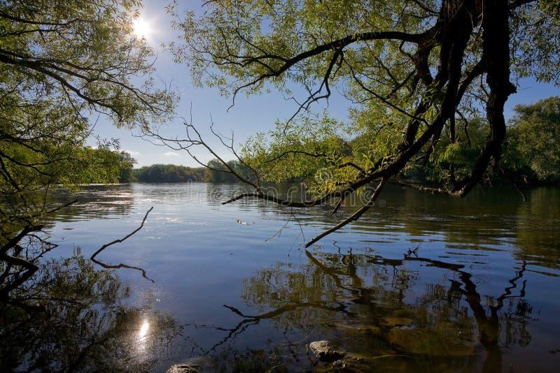 Download Rzeka obraz stock. Obraz złożonej z gałąź, woda, greenbacks - 13334337