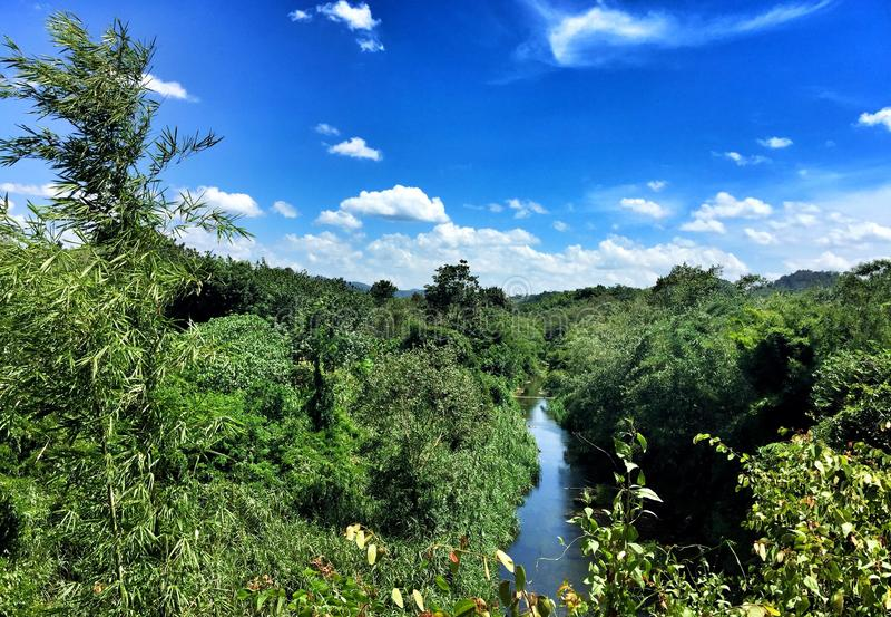 Rzeka chująca w lesie obraz royalty free