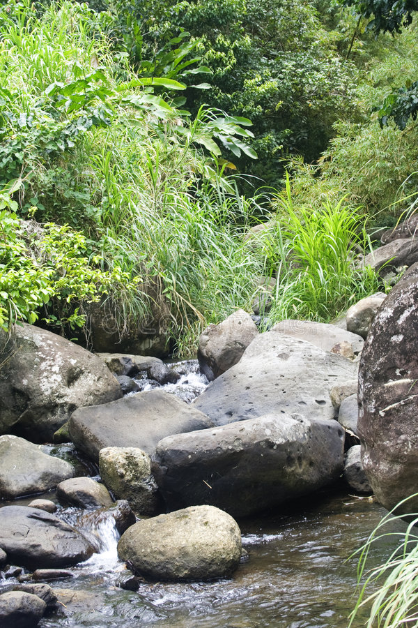 rzeka dżungli fotografia stock