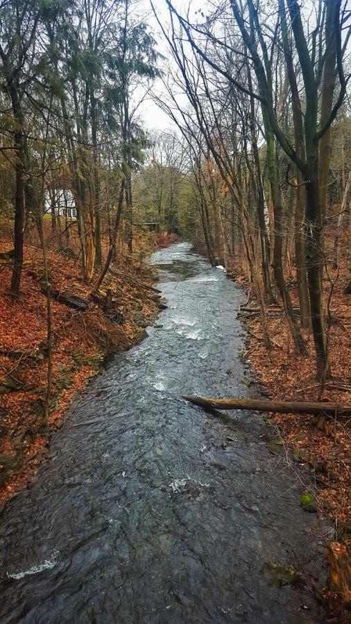 Rzeka i drzewa w zima krajobrazie zdjęcie royalty free