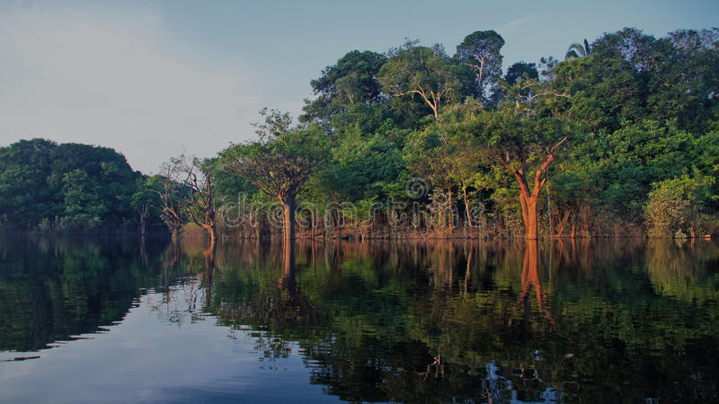 Rzeka i las tropikalny przy Amazonas, Brazylia zdjęcia royalty free