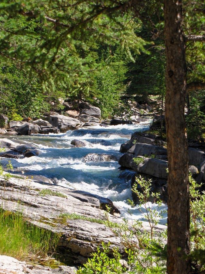 Rzeka i siklawy płynie w dół, Maligne jar, jaspis, Kanada zdjęcie royalty free