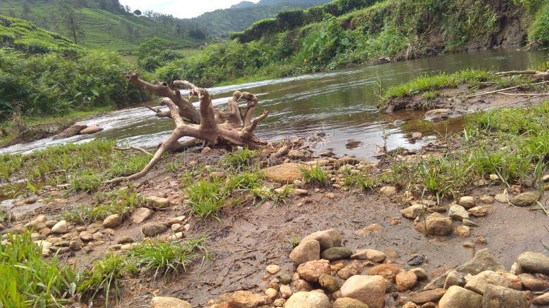 Rzeka i zieleń fotografia royalty free