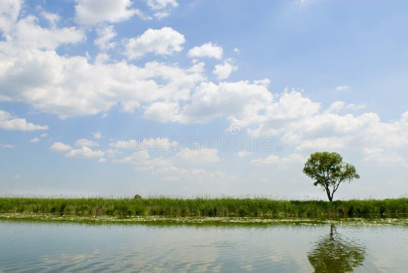 rzeka krajobrazu lato zdjęcie royalty free