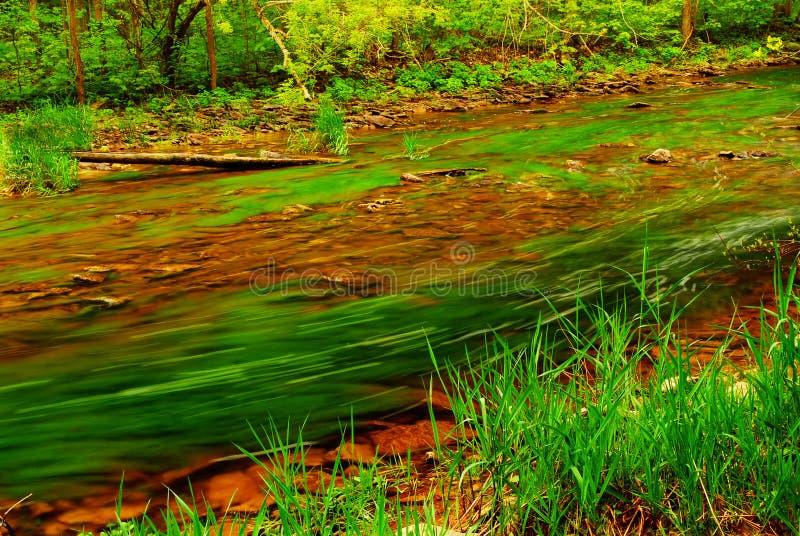 rzeka leśna obrazy stock