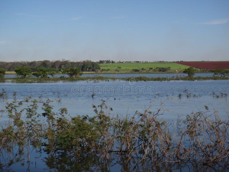 Rzeka - Nadwodna roślina zdjęcie royalty free