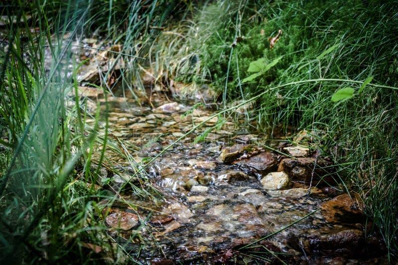 Rzeka naturalna woda z kamieniami i otaczająca roślinnością zdjęcie stock