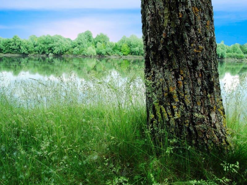 rzeka nieba drzewo fotografia stock
