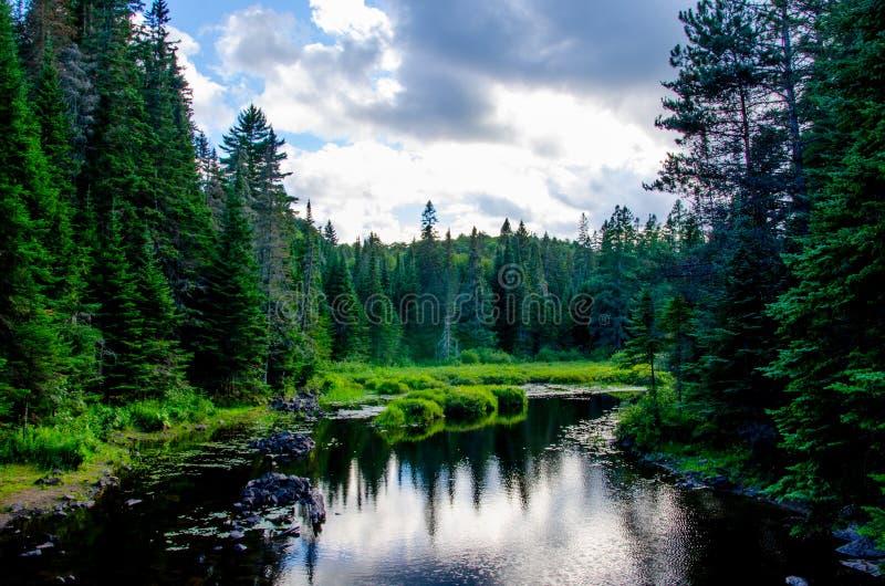 Rzeka otaczająca conifers zdjęcie stock