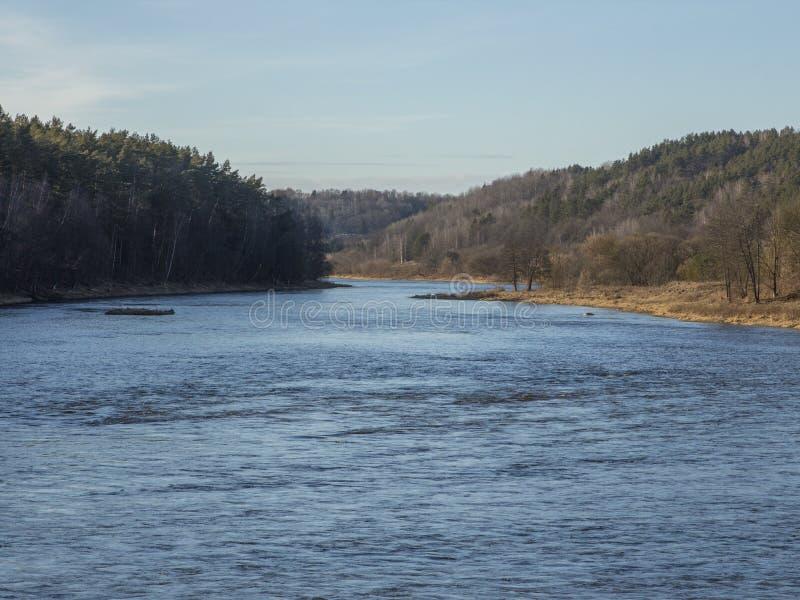 Rzeka otaczająca lasowymi drzewami zdjęcia royalty free