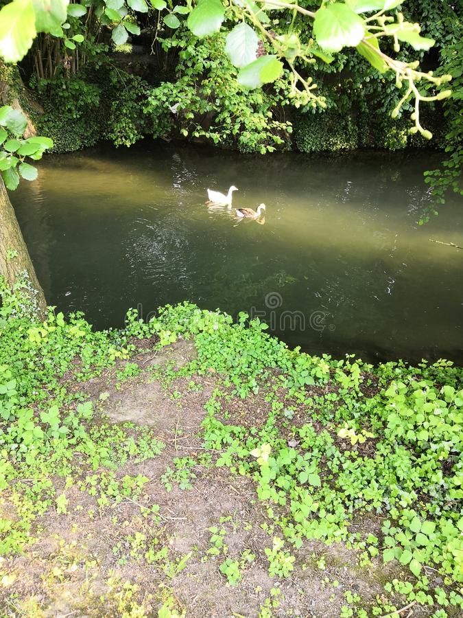 Rzeka podczas lata w las obraz royalty free