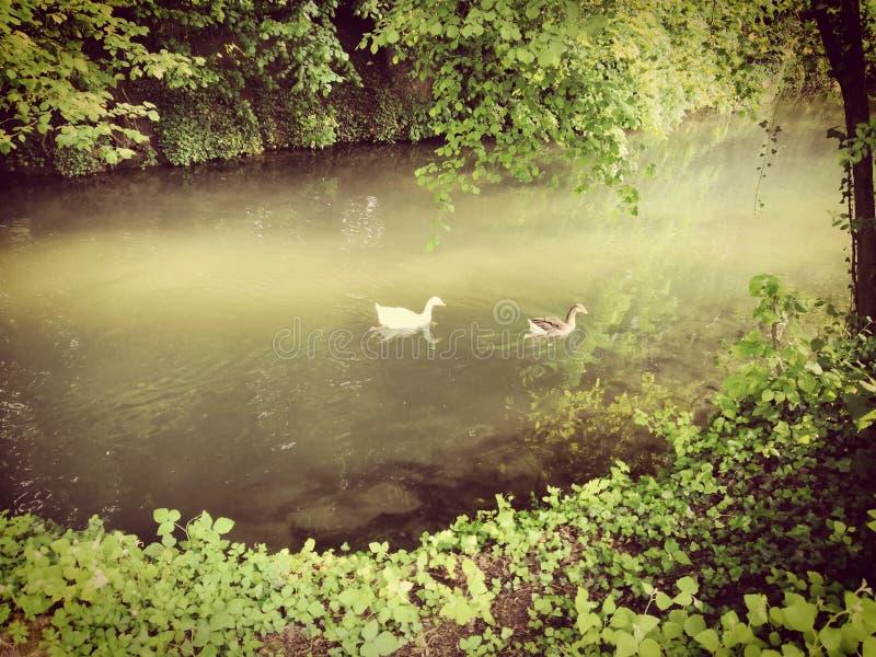 Rzeka podczas lata w las fotografia royalty free