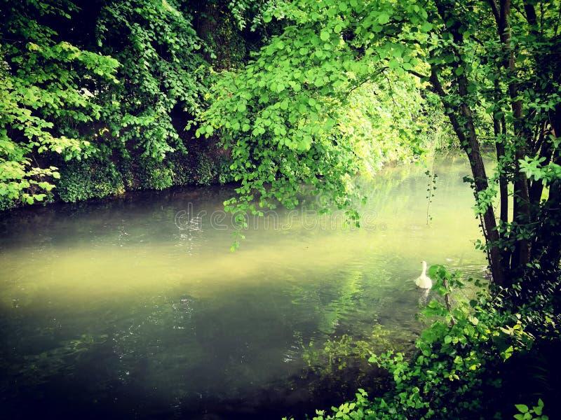 Rzeka podczas lata w las obraz stock