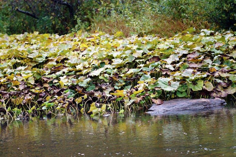 Rzeka przerastał z gałęzatką zdjęcie stock