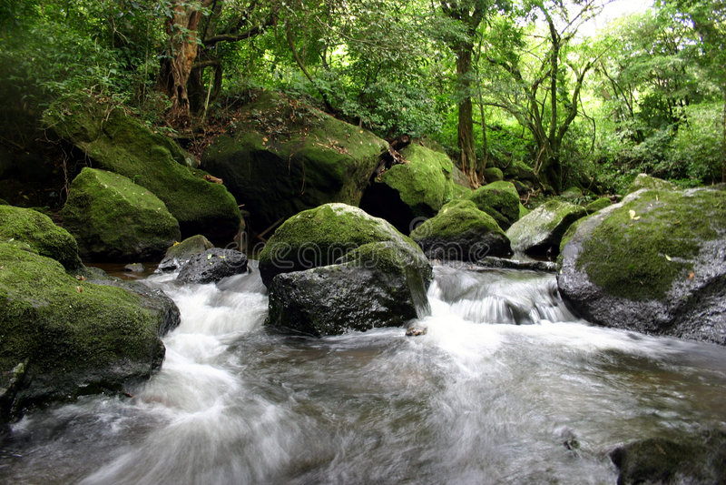 rzeka tropikalna obraz royalty free