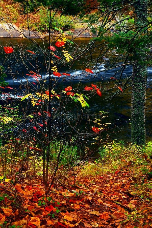 rzeka upadku lasu obraz royalty free