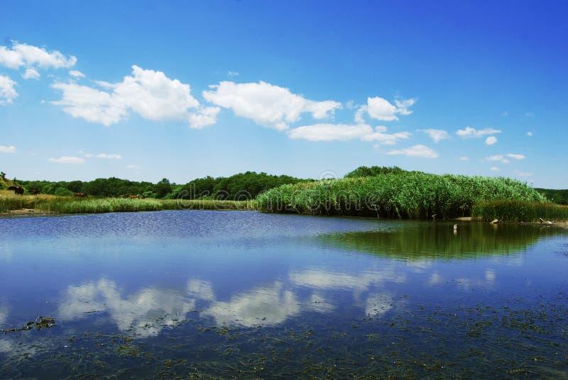 rzeka veleka zdjęcia stock