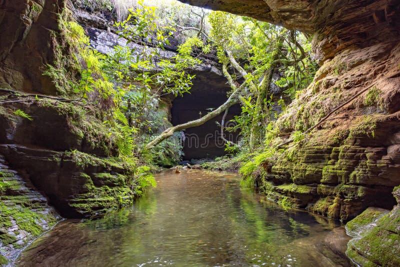 Rzeka wśród skał, mech, jamy i roślinności w tropikalnym lesie deszczowym, obraz royalty free