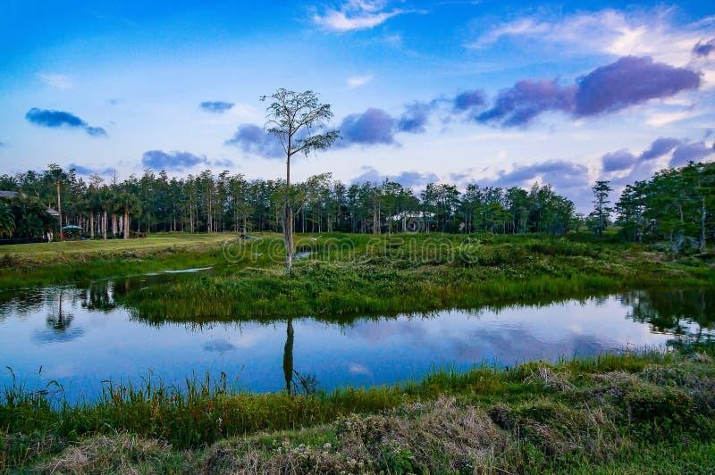 Rzeka w bagnie przy zmierzchem obrazy royalty free