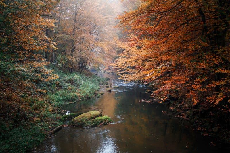 Rzeka w drewnach las jesieni fotografia royalty free