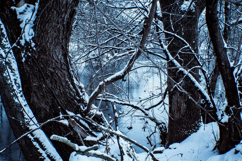 Rzeka w drzewach fotografia royalty free