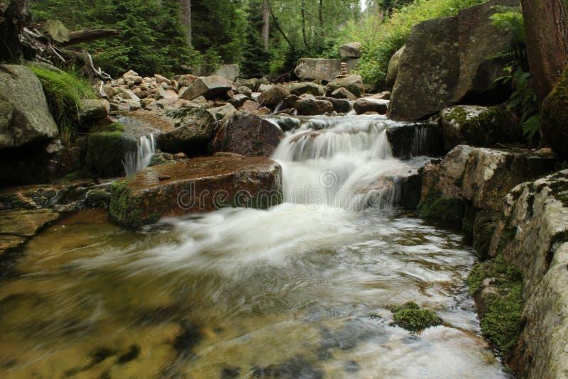 Rzeka w Lasowej siklawie Zieleń i Brown Colours zdjęcie royalty free