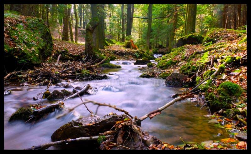 Rzeka w lesie fotografia stock