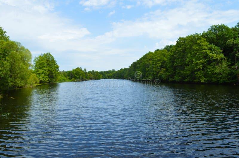 Rzeka w lesie w lecie fotografia stock