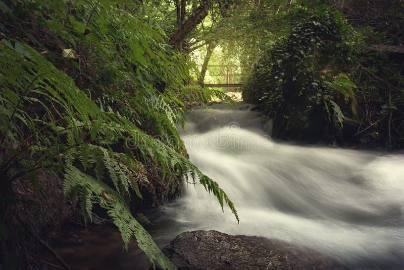 Rzeka w pełnym spływaniu zdjęcia stock