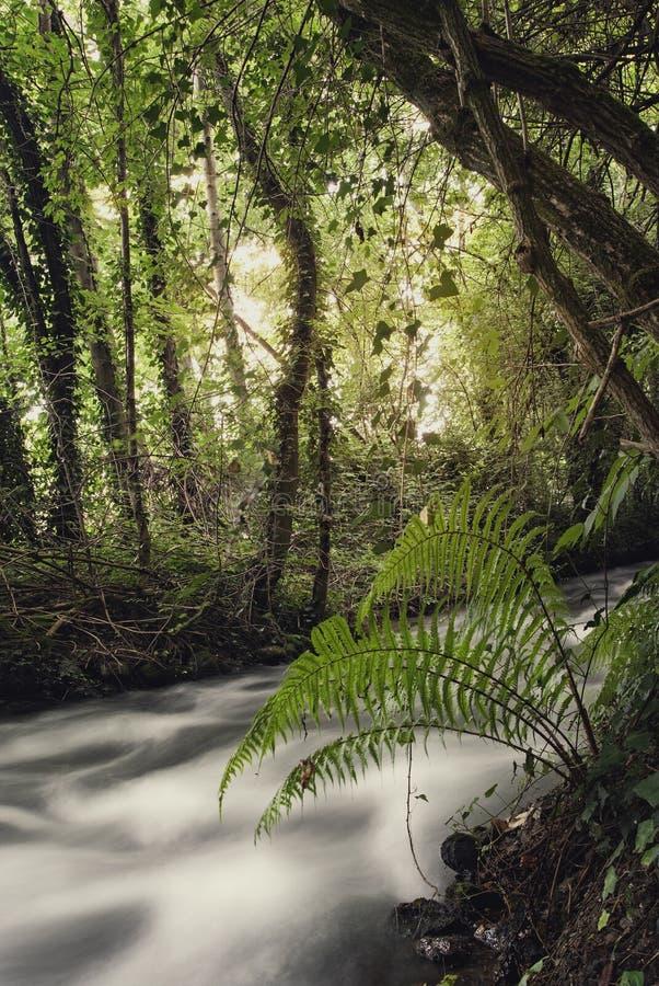 Rzeka w pełnym spływaniu obraz stock