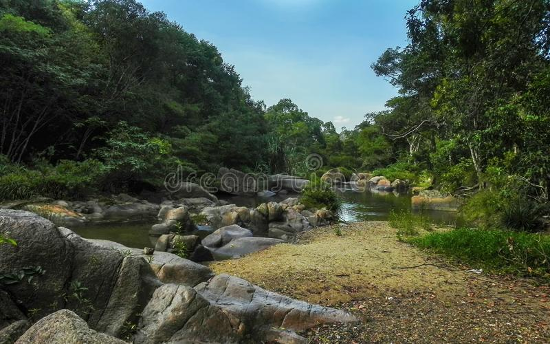 Rzeka w tropikalnym lesie deszczowym zdjęcie stock